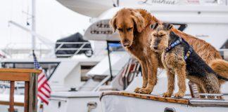 Kreuzfahrt mit Hund