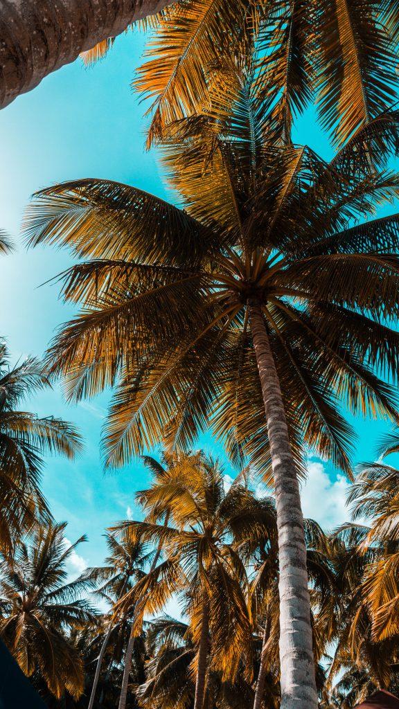 Kreuzfahrt über Weihnachten Karibik