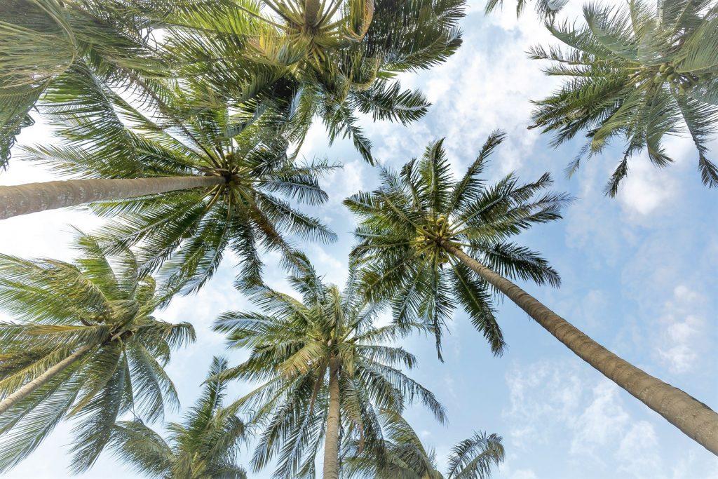 Palmen bei blauen Himmel