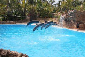 Die Delfin Show im Loro Parque