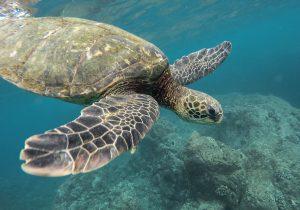 Heraklion Sehenswürdigkeiten - Schildkröte
